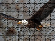 Click to Play Bald Eagle Jigsaw Puzzle