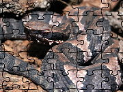 Click to Play Cottonmouth Jigsaw Puzzle